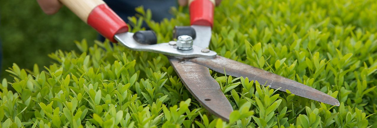 Tuinwerkzaamheden Woningontruiming Mobo